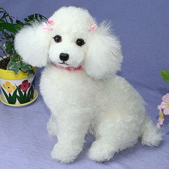 White Poodle Poodle Dog Toy Poodle Poodle Puppy