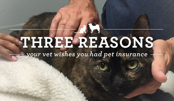 Three Reasons Your Vet Wishes You Had Pet Insurance Pet