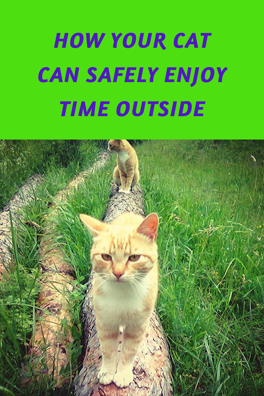 How Your Cat Can Safely Enjoy Time Outside In 2020 Cats Feline Health Enjoy Time