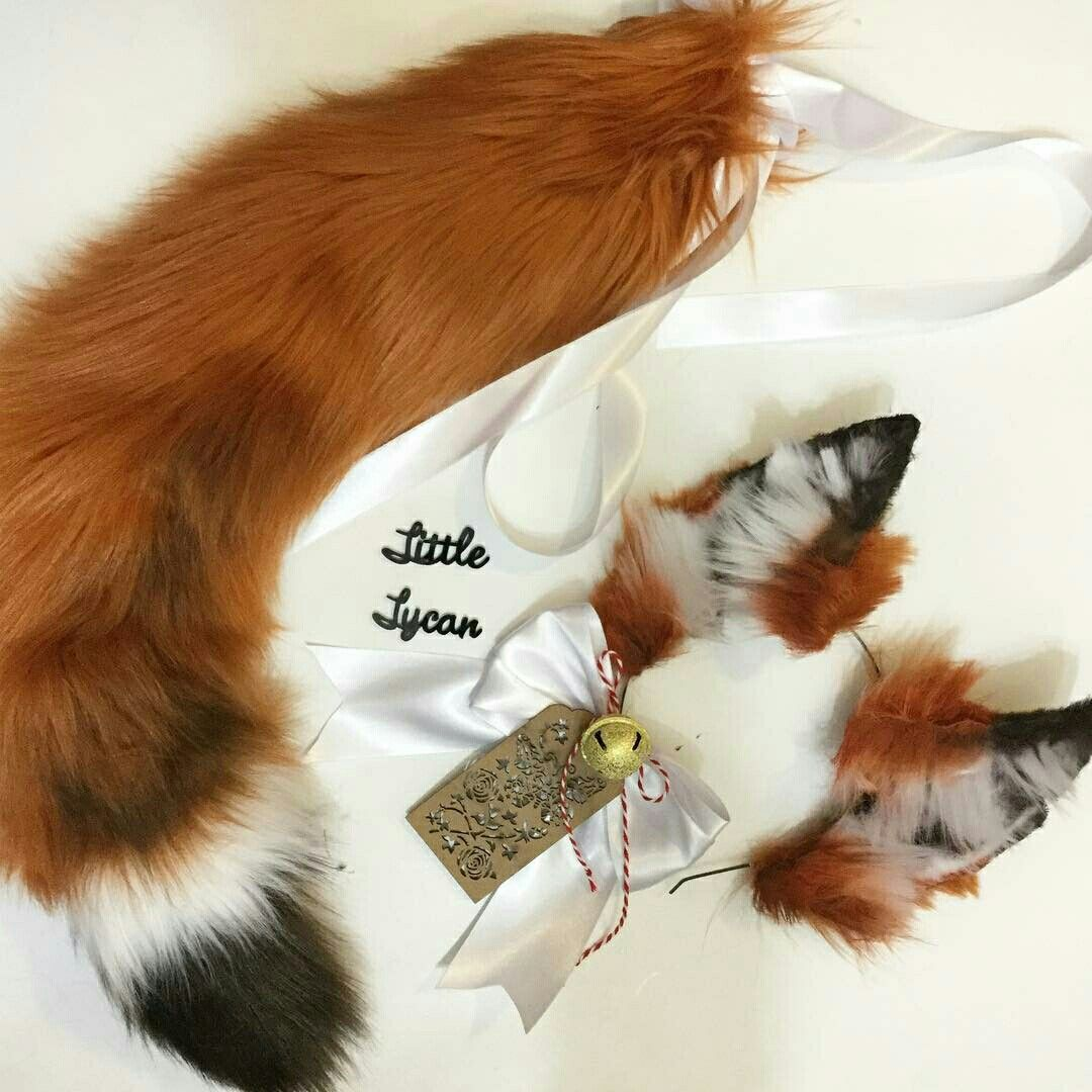 I Want Thisss  Foxes In 2019  Kittens Playing, Cats -2651