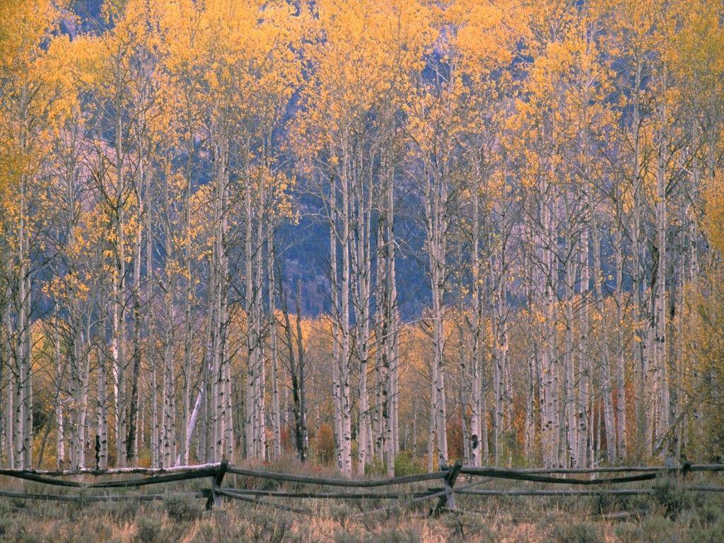 Autumn s concerto wallpaper - Autumn S Concerto Wallpaper Http Wallpapic Com Nature Autumn
