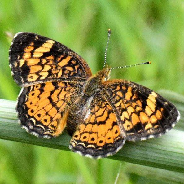 Urban Vegetable Gardening For Beginners: Butterfly Plants, Butterfly