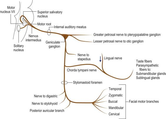 image result for petrotympanic fissure | jay's board | pinterest, Human Body