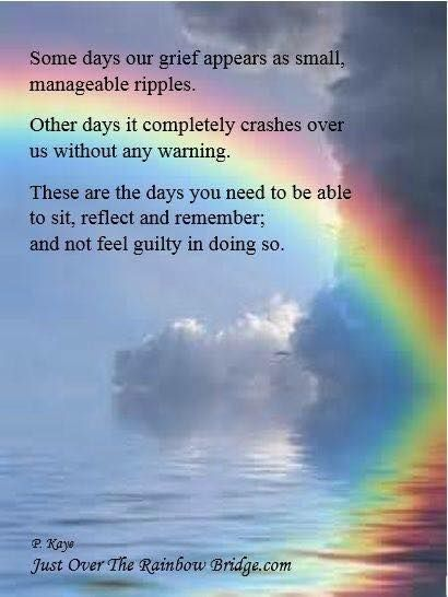 Remembering All The Dogs That Have Crossed The Rainbow Bridge