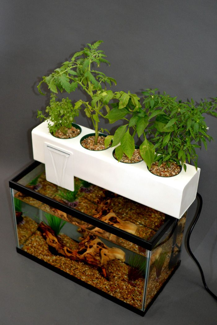 Andrew de Melos Aquaponic Blue Green Box Uses Fish Waste to