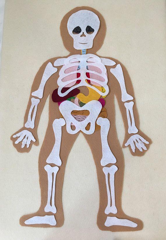 My body skeleton educational felt set anatomy bones science my body skeleton internal organs educational felt set to ccuart Choice Image
