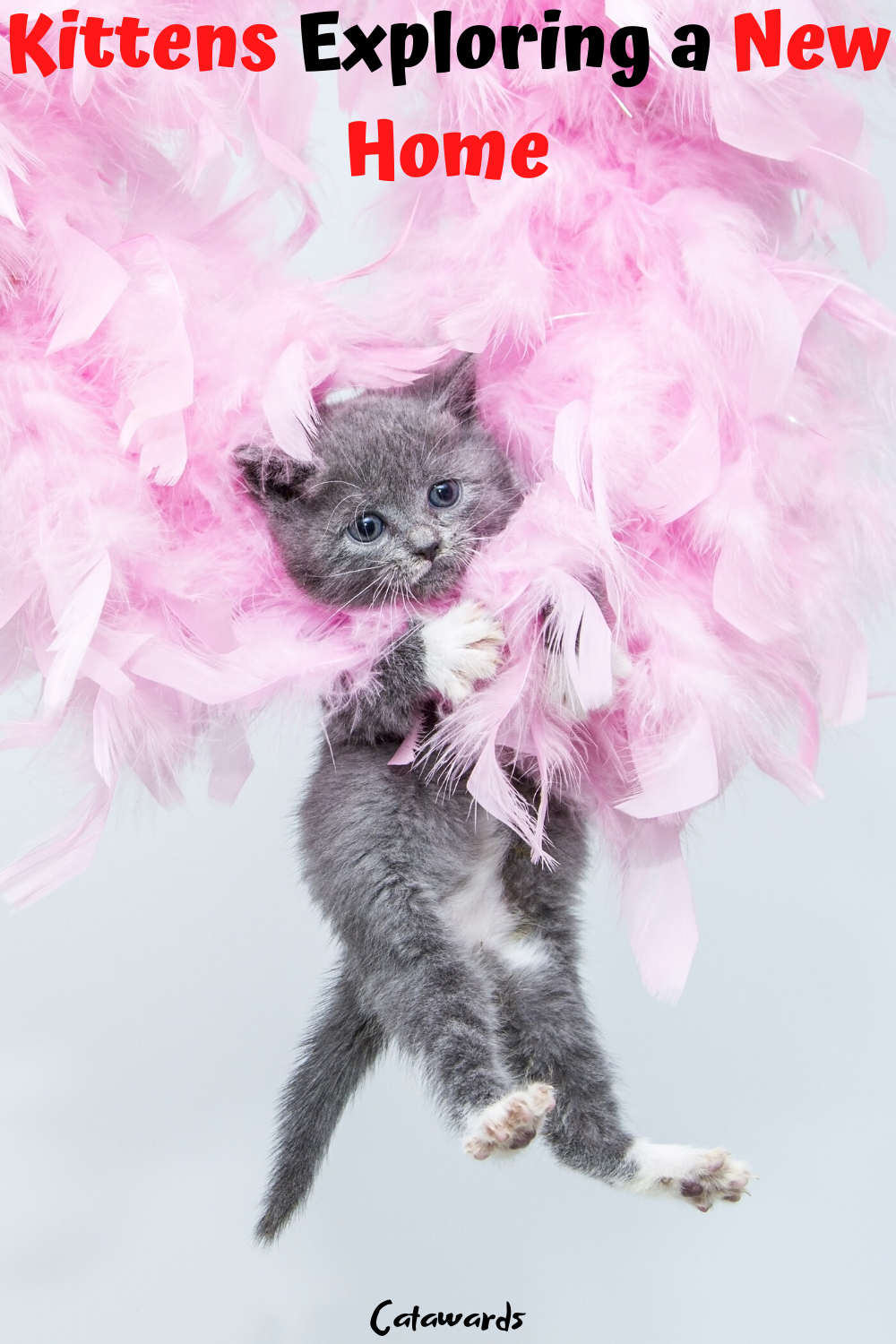 Kitten Care Tips Bringing Home A New Kitten In 2020 Kitten Care Cat Facts Cat Shirts Funny