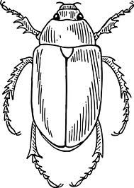 Christmas Beetle Art Google Search Insect Coloring Pages Bug