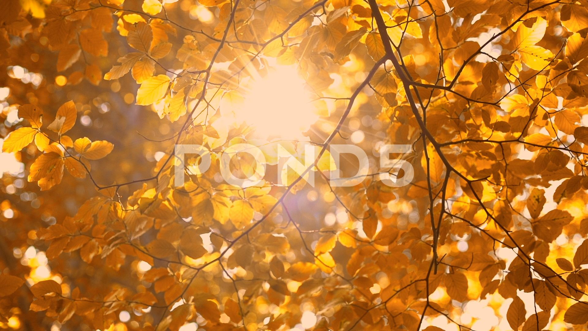 Fall Trees Leaves And Shining Sun Rays In The Park Beautiful Nature Background Stock Footage Ad Shining S Beautiful Nature Autumn Trees Nature Backgrounds