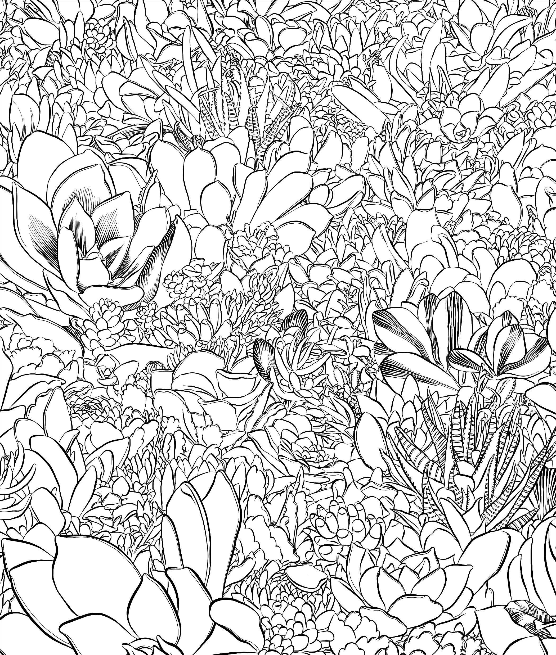 Sensational Succulents An Adult Coloring Book Of Amazing Shapes And Magical Patterns Debra Lee