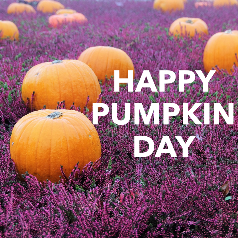 Happy National Pumpkin Day What Is Your Favorite Way To Enjoy It Pumpkin Happy Pumpkin Productive Day