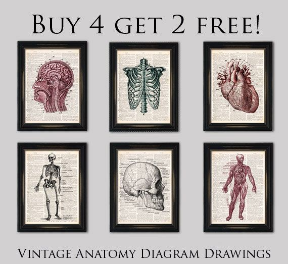 Old anatomy drawing Spine Ribcage dictionary art print- Vintage ...