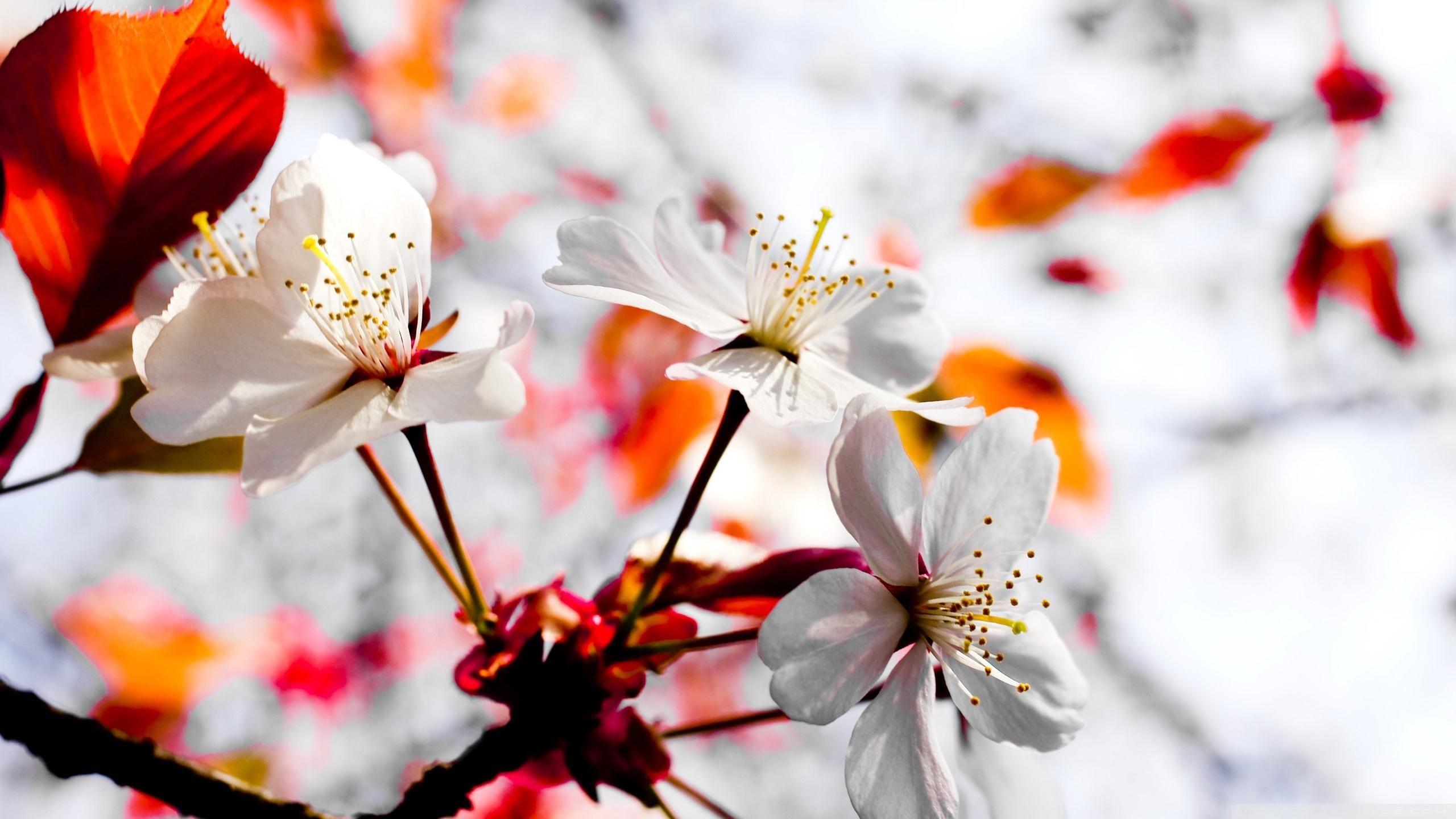 Wallpaper Hd For Desktop Full Screen 1080p 49 Pictures Spring Wallpaper Spring Season Flowers Hd Flower Wallpaper