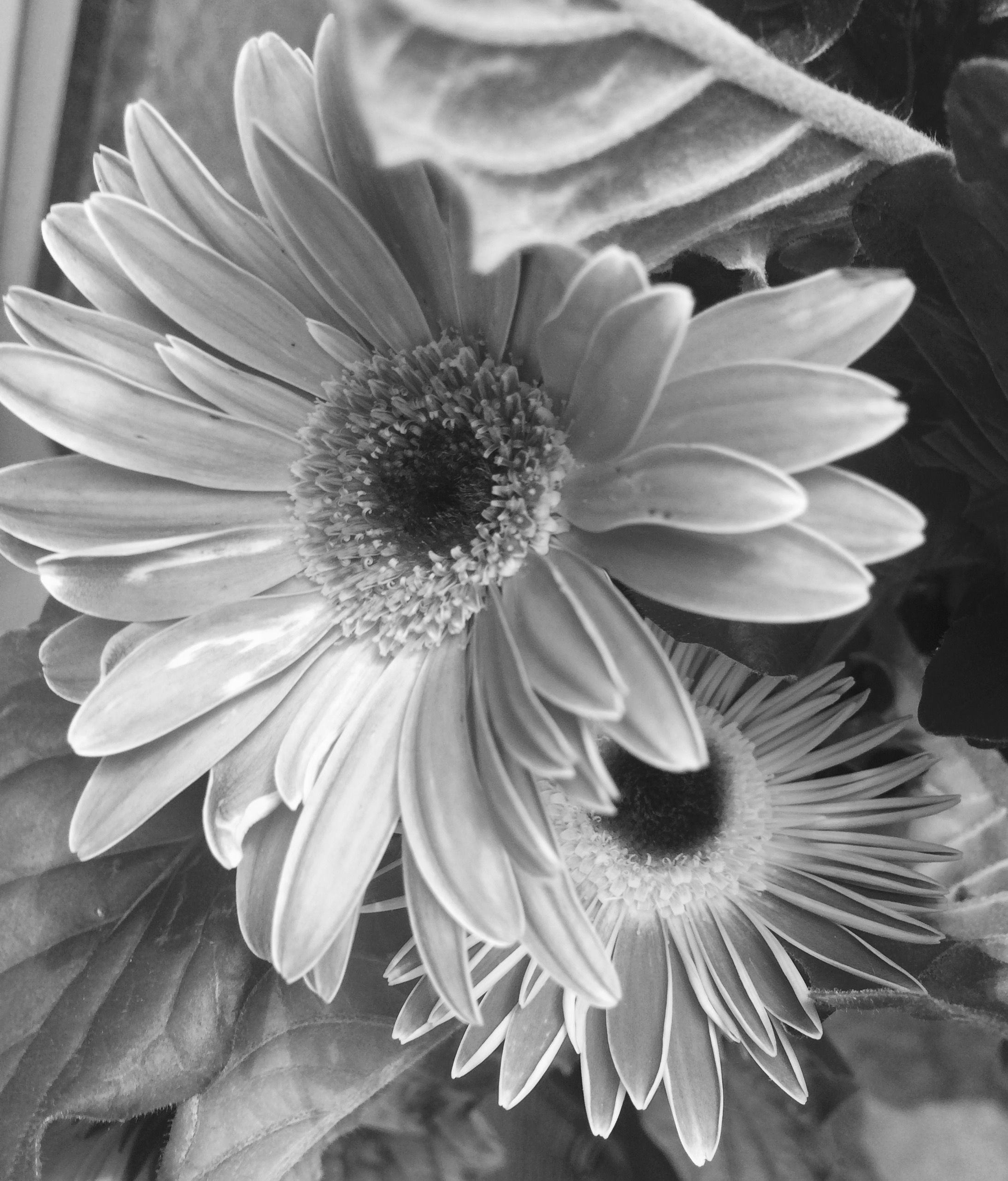 Pin By Vicky On Plants And Flowers Beautiful Flowers Photos
