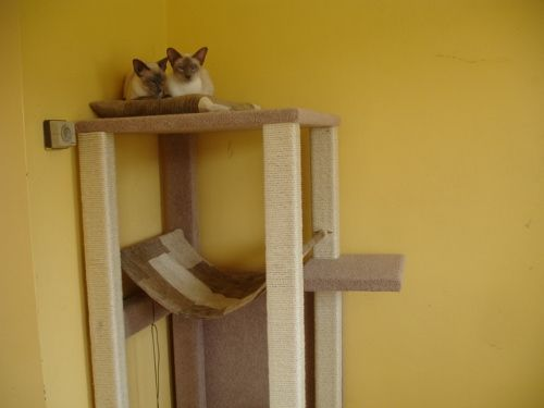 how to make a cat tree out of a ladder