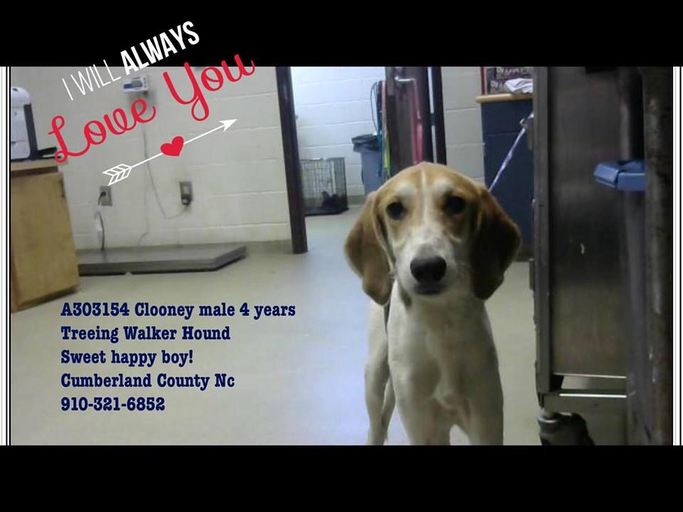 Cumberland County Animal Shelter Fayetteville Nc Is Full All