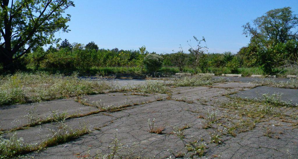 Image result for overgrown parking lot landscape
