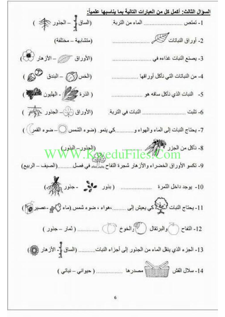 اوراق عمل تدريبية في مادة العلوم الصف الثاني علوم الفصل الأول ملفات الكويت التعليمية Math Sheet Music Math Equations