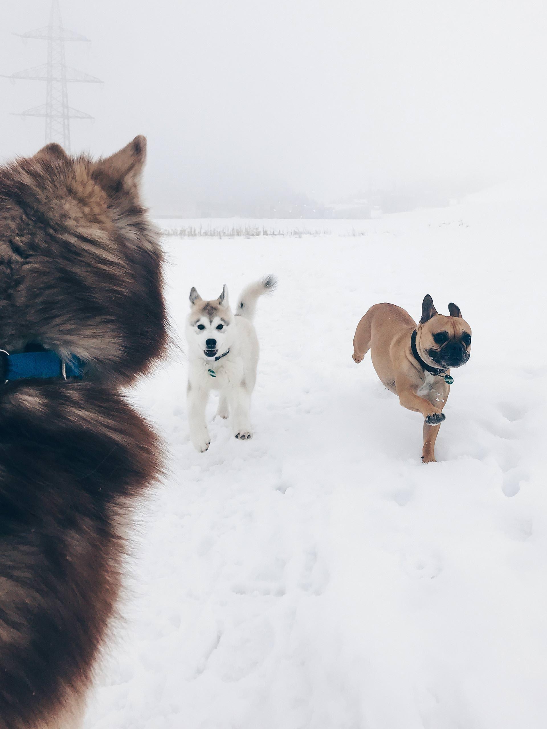 Ratgeber Ich Mochte Einen Hund Was Muss Ich Beachten