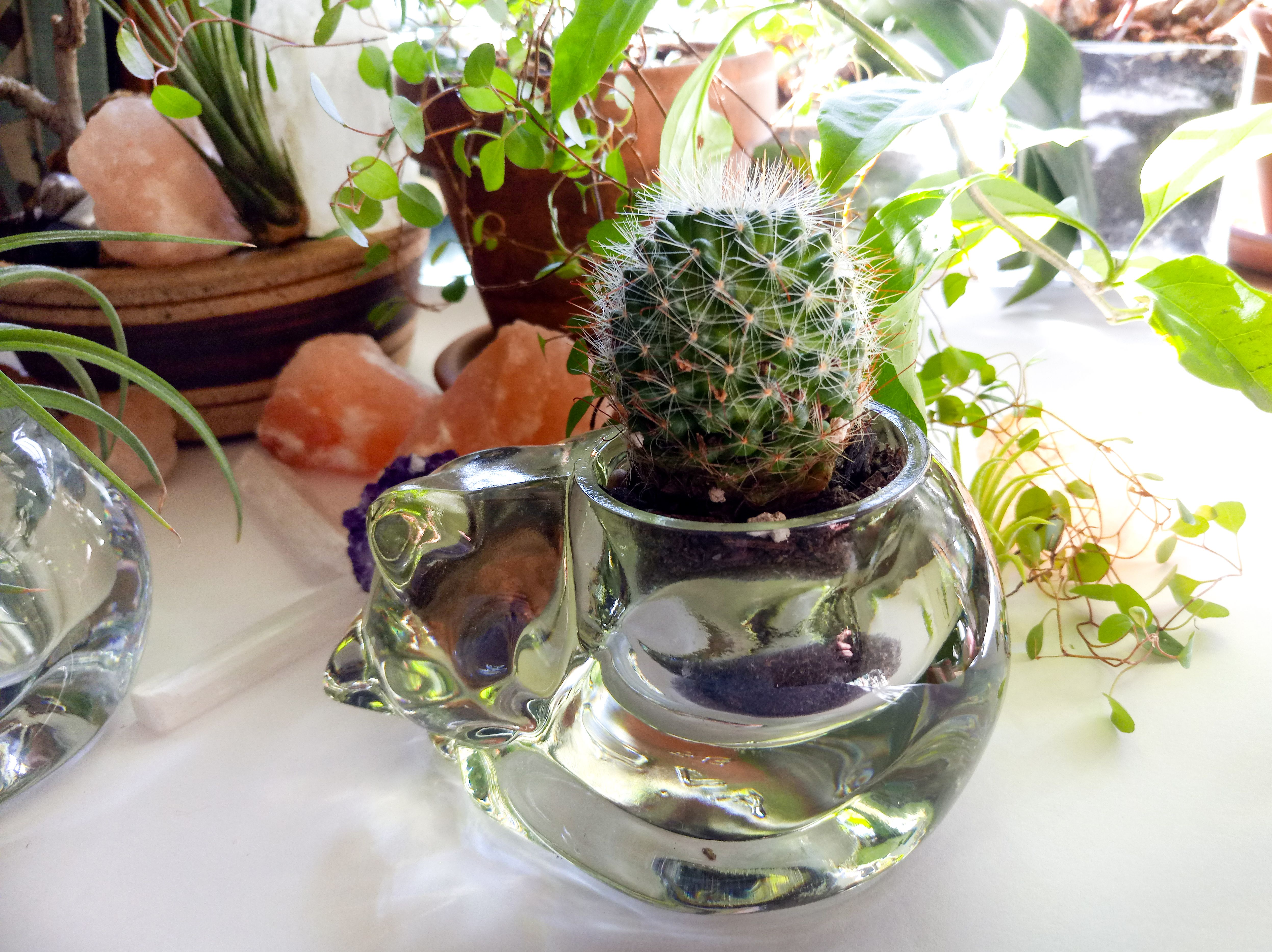 Cactus in cat shaped planter cactus cacti cats