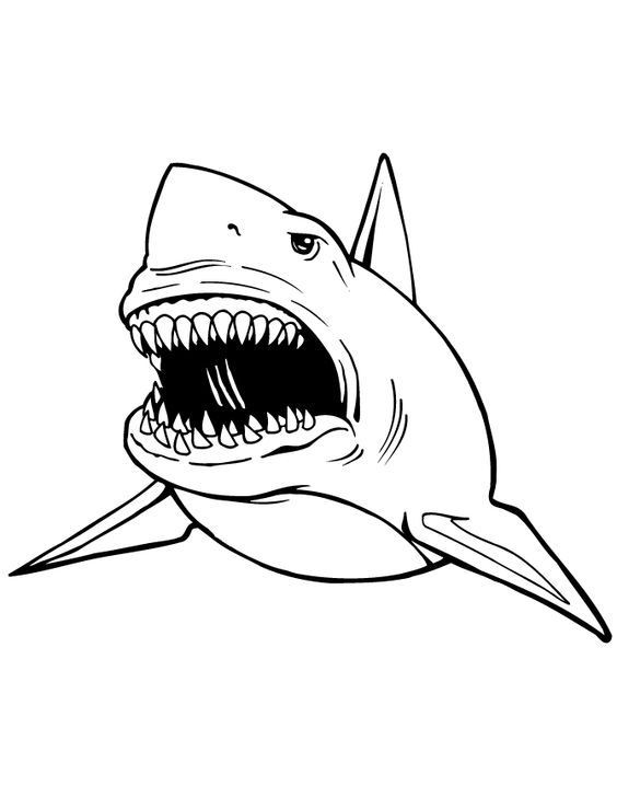 great white shark coloring pages # 8