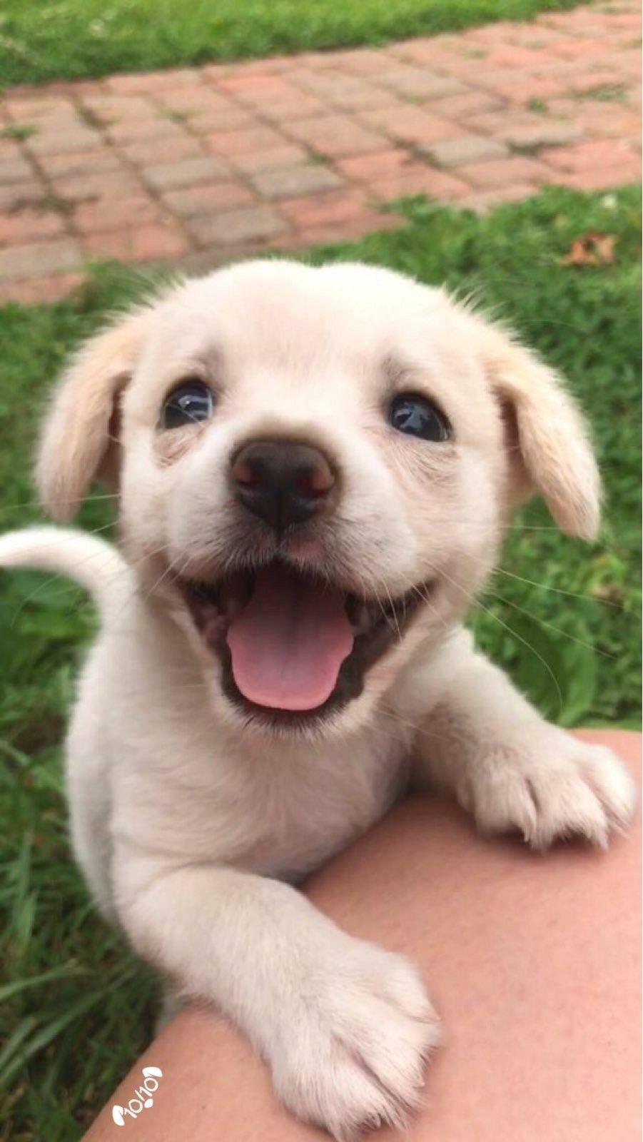 super cute smiling puppy😊 | døgş | pinterest