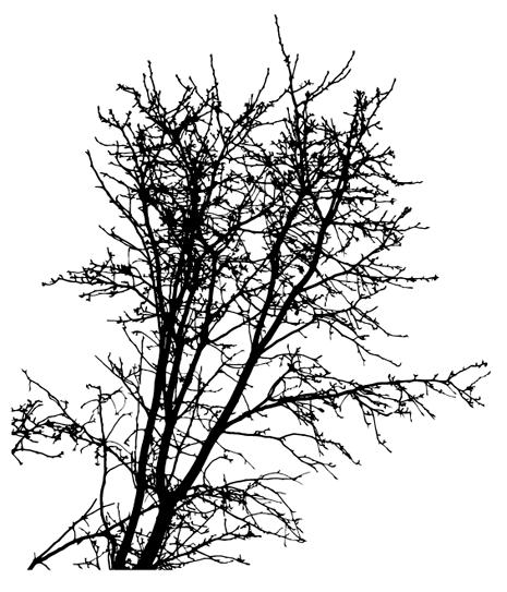Winter Tree Vector Trees Tree Silhouette Vector Free