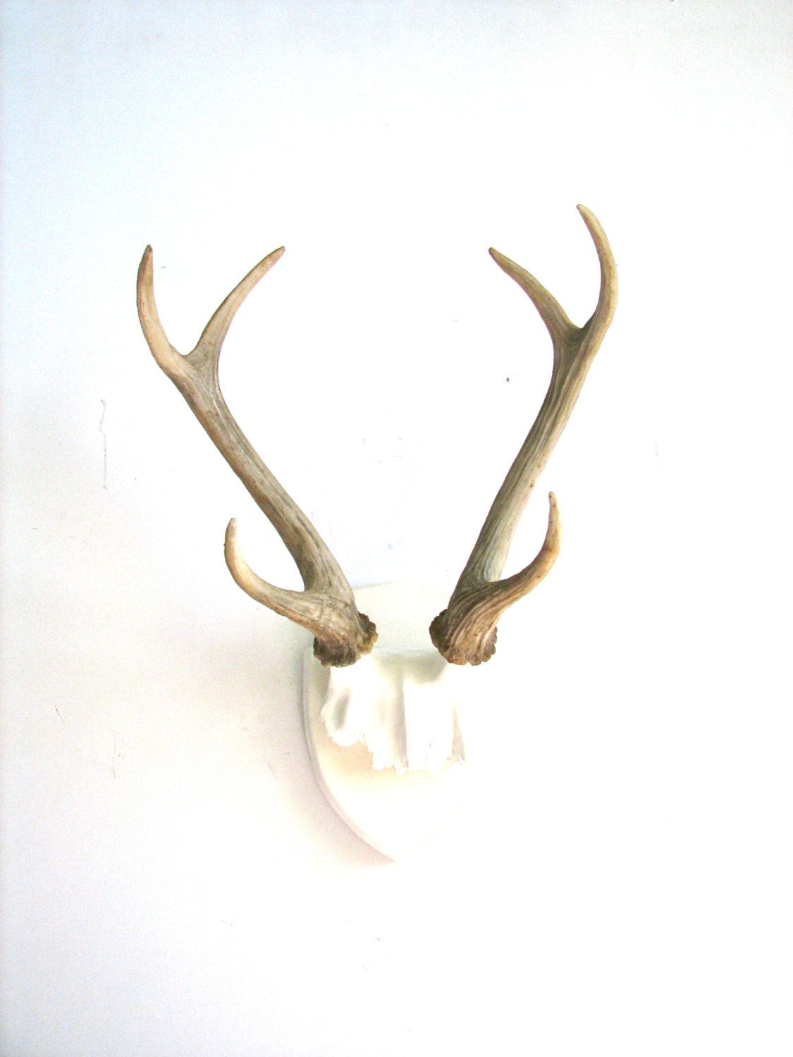 Wall Antlers Decor Google Search
