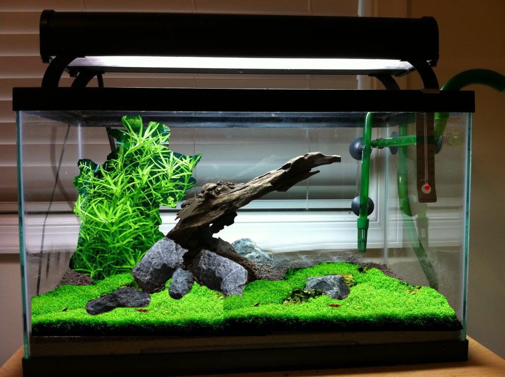 10 Gallon Vivarium Care This | PetShopBoi420 | Pinterest ... 10 Gallon Vivarium