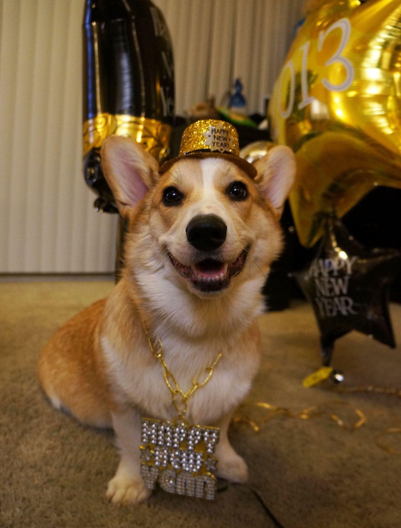 Happy Corg Year Smiling Dogs Pet Holiday Corgi