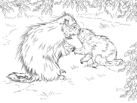 North American Porcupine with Baby Coloring page for kids