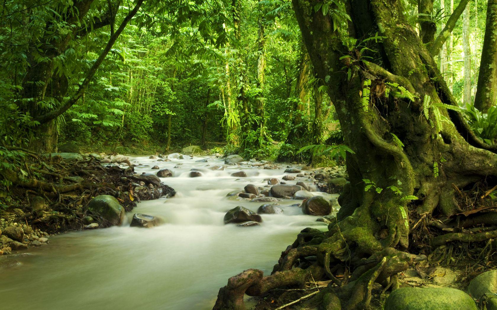 Fondo De Pantalla Selva: Fondos De Pantalla Hd Selvas