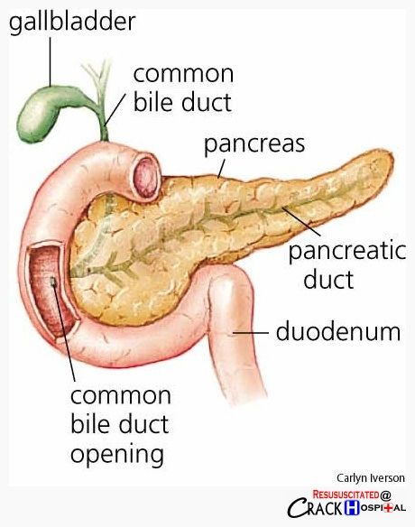 A Little Diagram Of Your Pancreas Gallbladder And Duodenum Nice Right Human Digestive System Human Anatomy And Physiology Pancreas