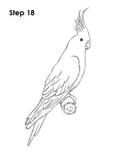 How To Draw A Cockatiel Bird Drawings Animal Drawings