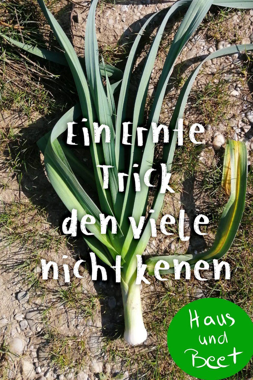 Lauch Porree Aus Dem Garten In Deine Kuche Haus Und Beet Porree Porree Pflanzen Lauch
