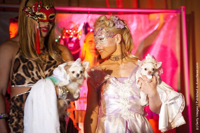 Dog Fashion Show Held Ahead Of Next Week S Westminster Kennel Club