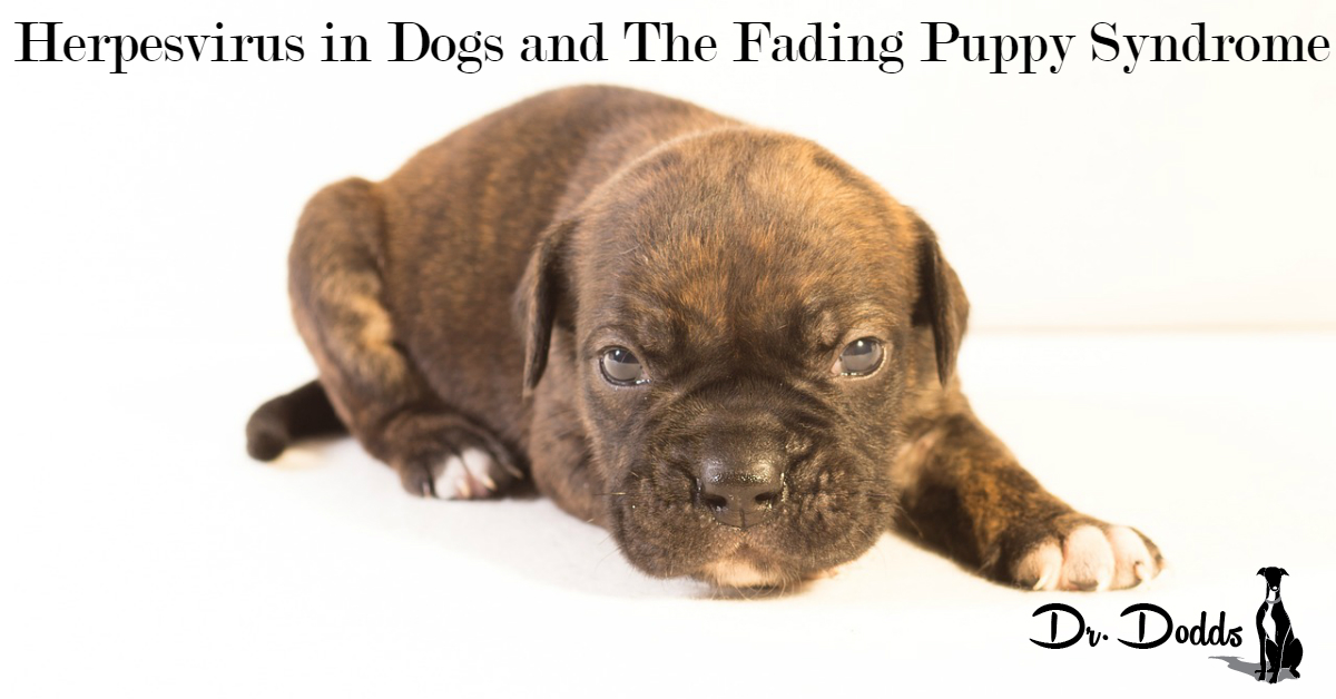 Herpesvirus in Dogs and The Fading Puppy Syndrome