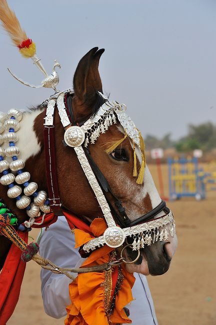 Display of dancing horses at the 81st eEndurance event, Dundlod, Rajasthan, India. Michael Huggan Photography.