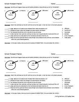 Transport In Cells Worksheet - worksheet