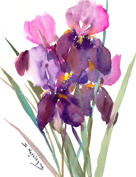 Deep Purple Pink Irises Original Watercolor Painting 15 X 12