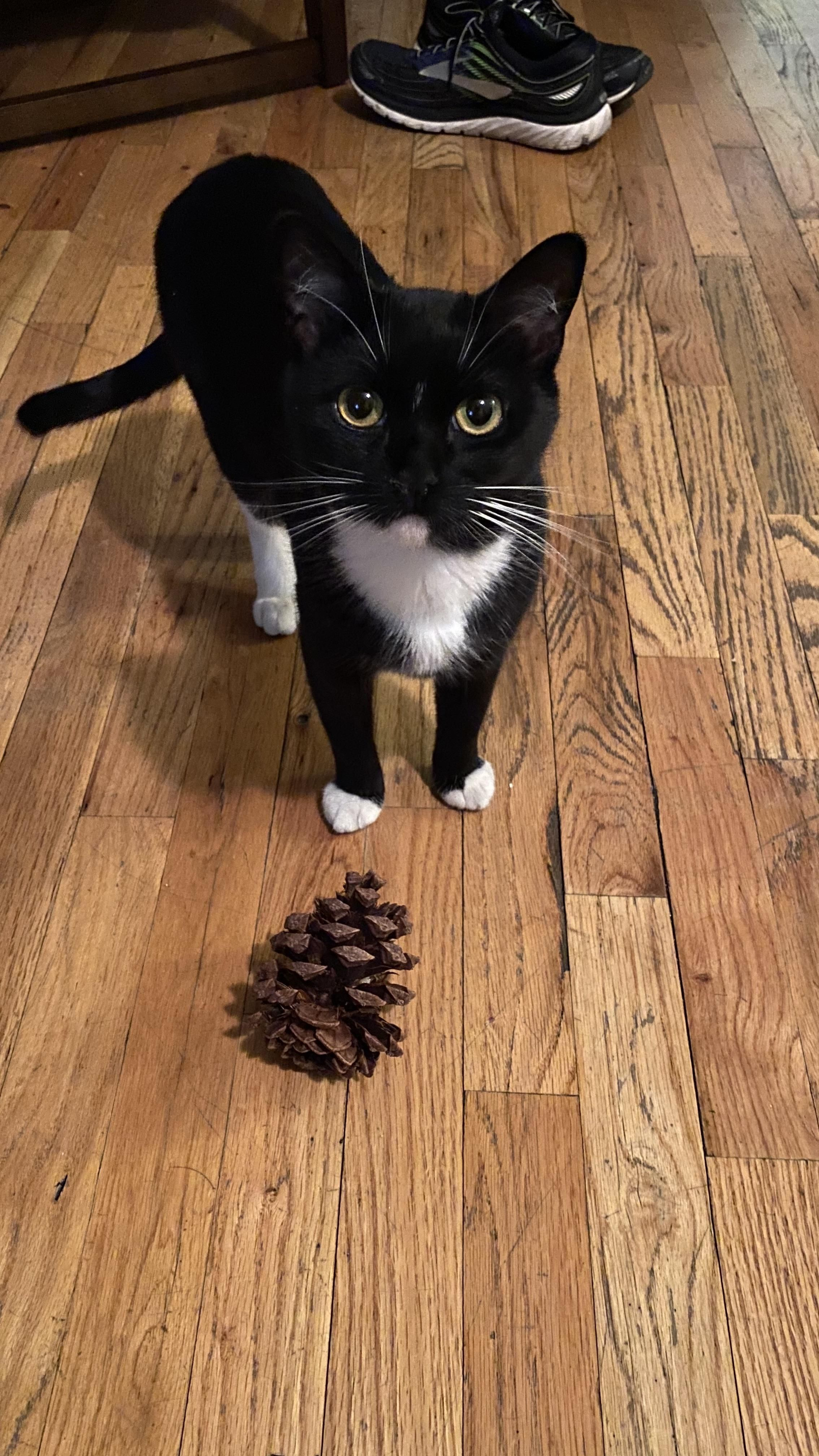 Shes Proud Of Her Pine Cone Teelast Com In 2020 Kittens Cutest Cat Mom Sweet Animals