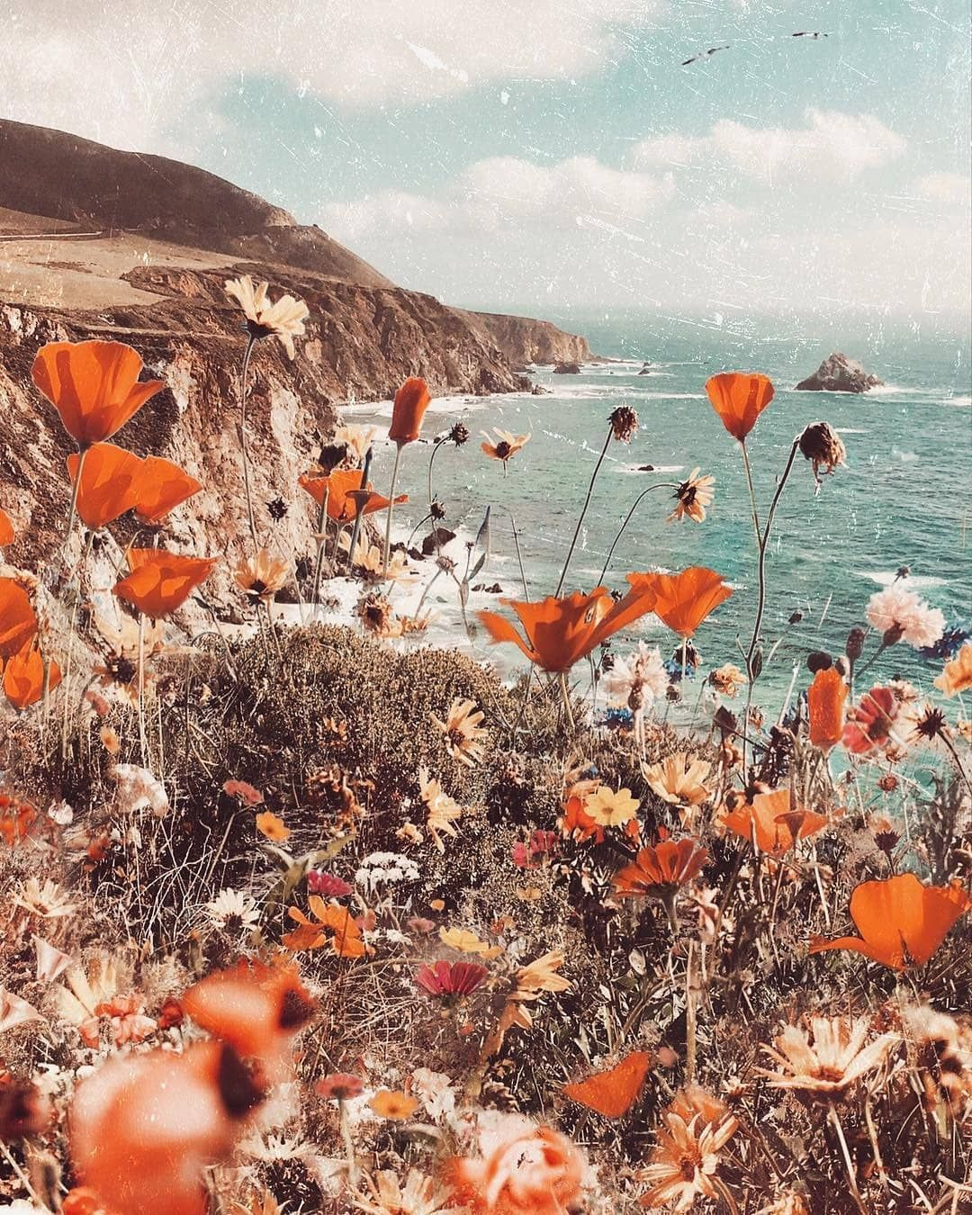 Find Me Outside Soaking Up The Sun Cred Odwyer Sio9 Unbaciobabe Find Me Outside Picture Collage Wall Aesthetic Backgrounds Aesthetic Wallpapers
