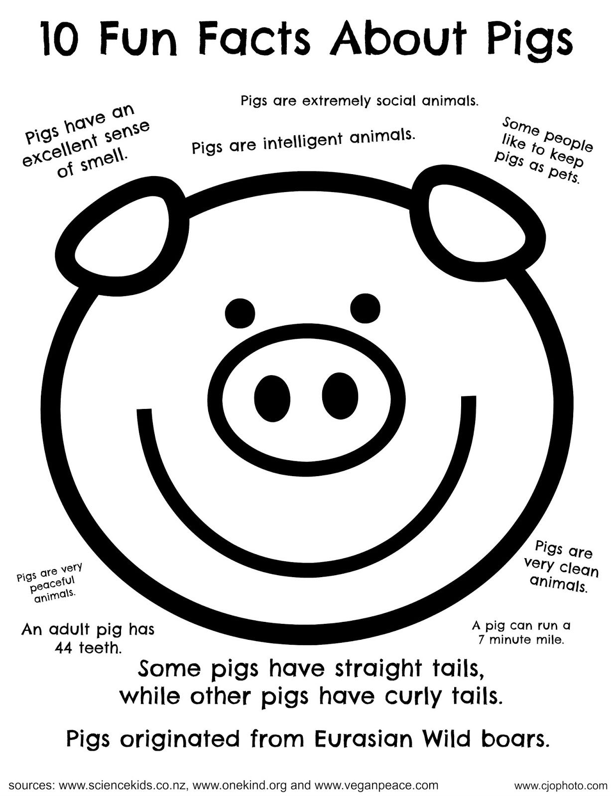Fun Facts Coloring Page Pigs Fun Facts For Kids Pig Facts For Kids Fun Facts [ 1600 x 1237 Pixel ]