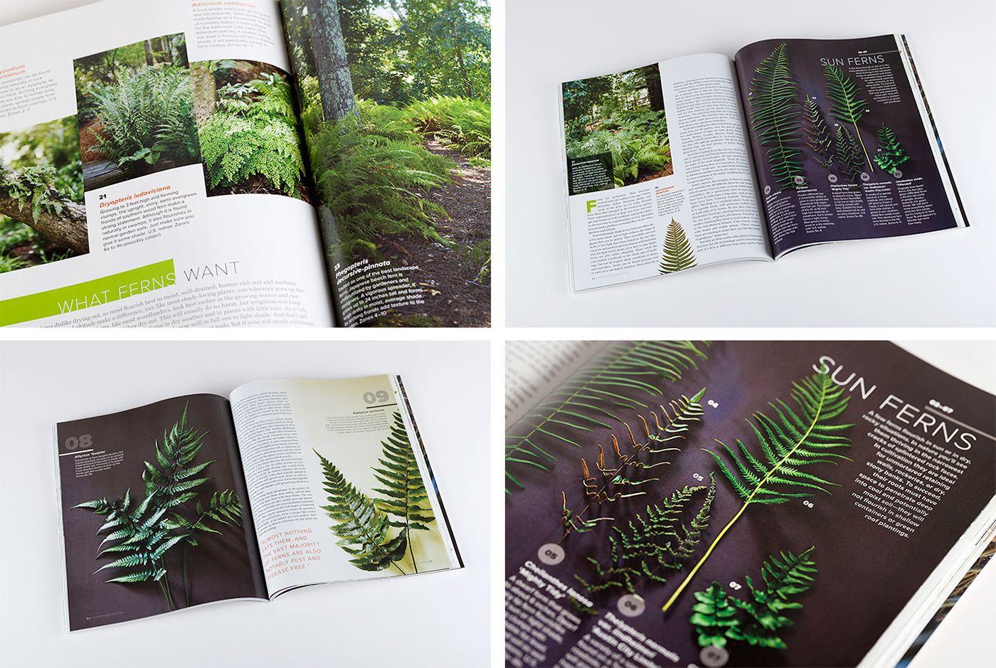 Iilustrations For Garden Design Magazine On Behance Garden Design Magazine Garden Design Design