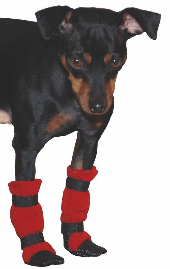 b4de5ef4c4 MINIATURE PINSCHER Dog Booties by VoyagersK9Apparel on Etsy