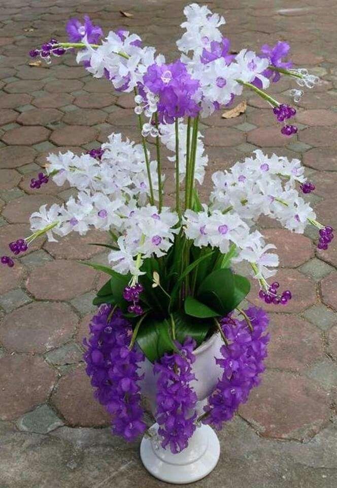 Hermosa Orquídea... Flores, Jardines, Arreglos florales