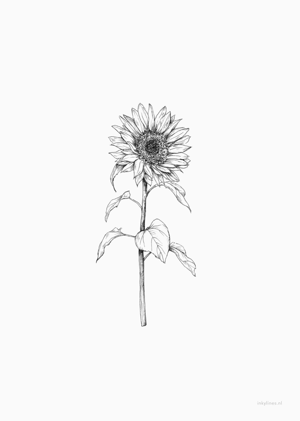 Photo of Printables – Sunflower