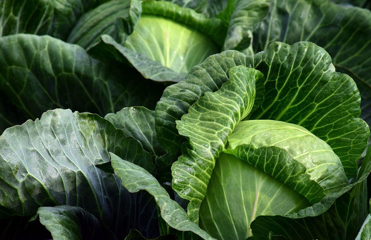 Ешьте это блюдо на обед 3 дня подряд, чтобы почистить кишечник и сбросить лишние килограммы | Couves, Dicas de horta, Plantação