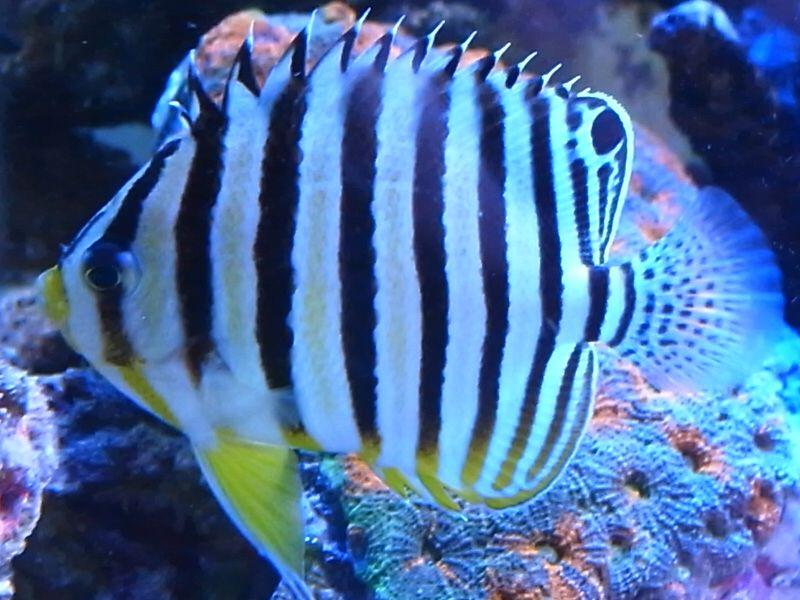 http://www.aquariumzone.jp/image/10091801.jpgからの画像