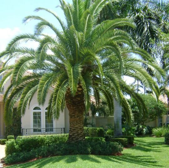 Types Of Lilies In Florida: Types Of Palm Trees In Fl …